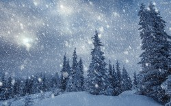 heavy-snowing-in-the-forest-3498-2560x1600