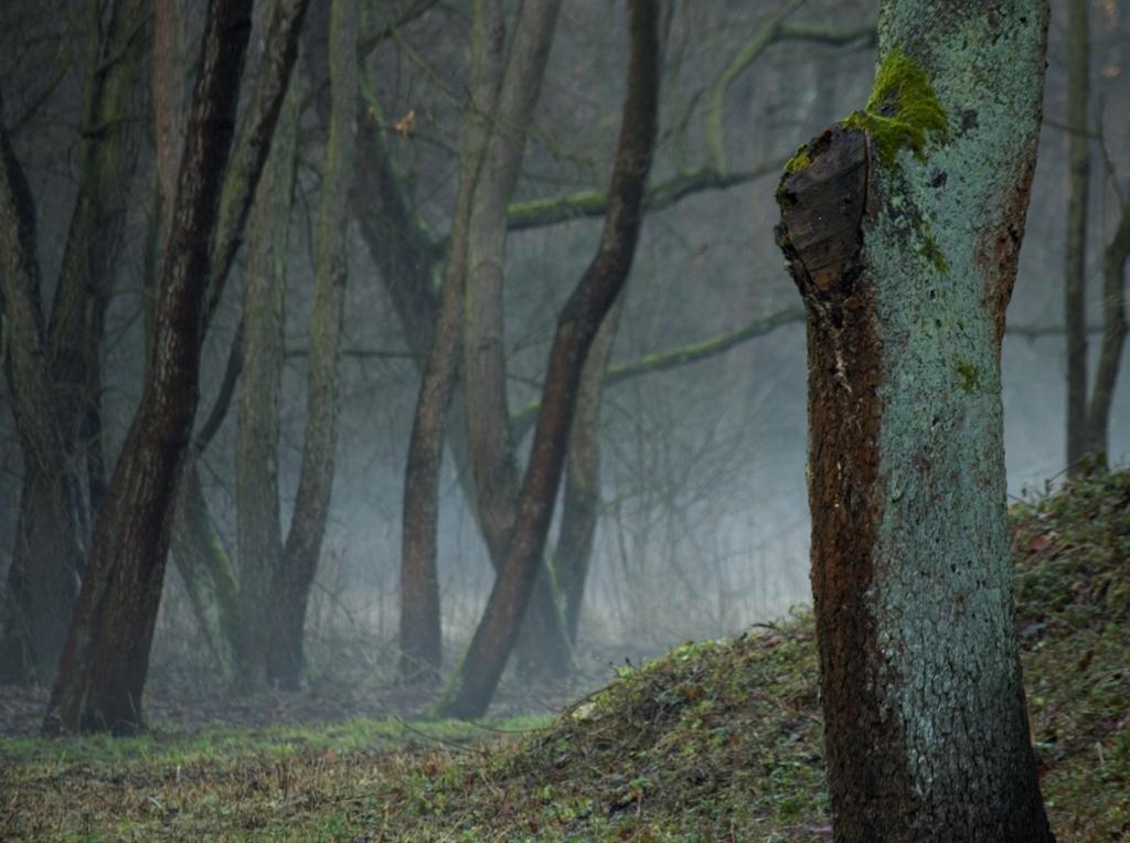 fot.Krzysztof Kamiński_Dolina Mnikowska gm. Liszki