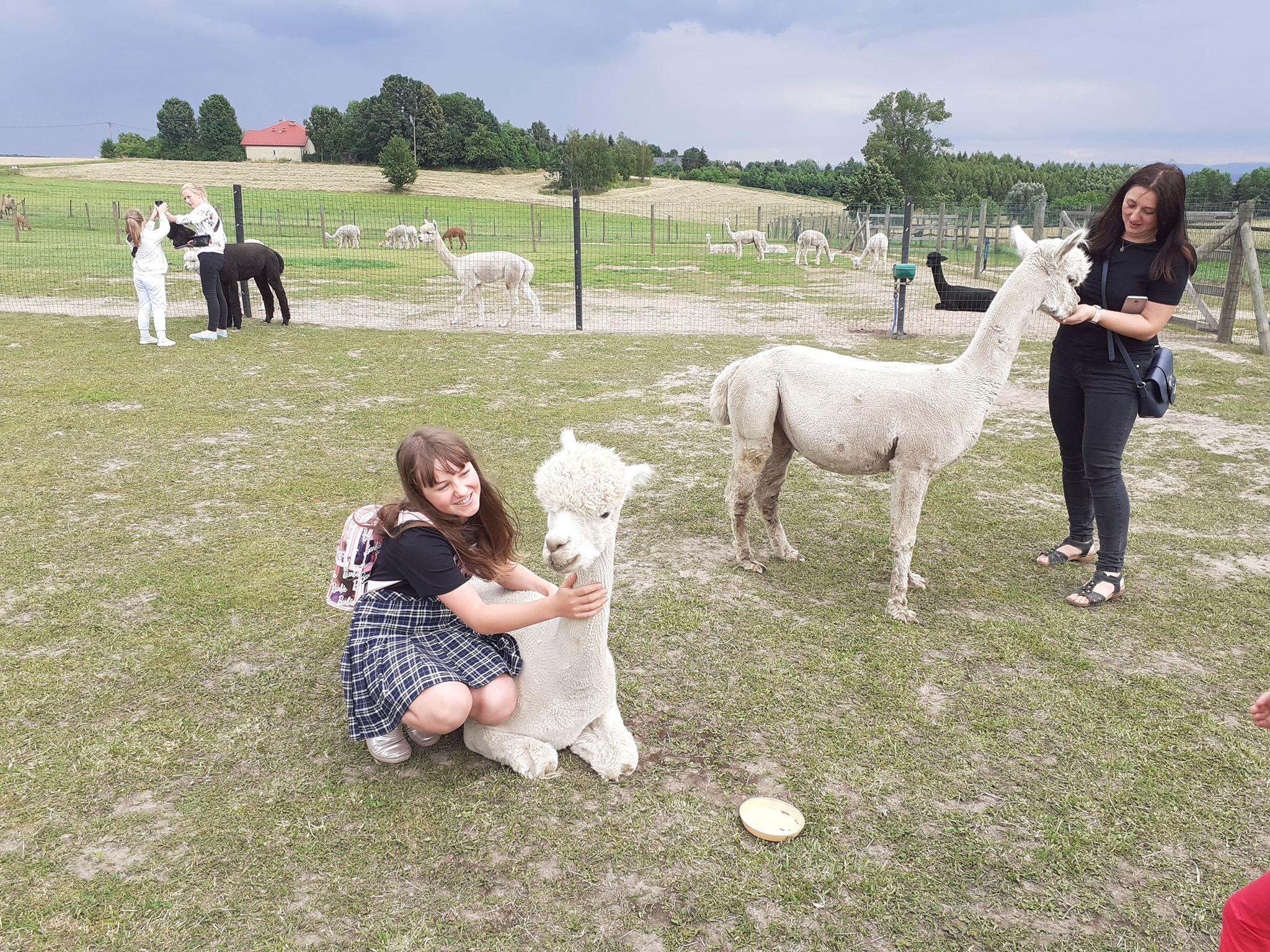 Dziewczyna i alpaka